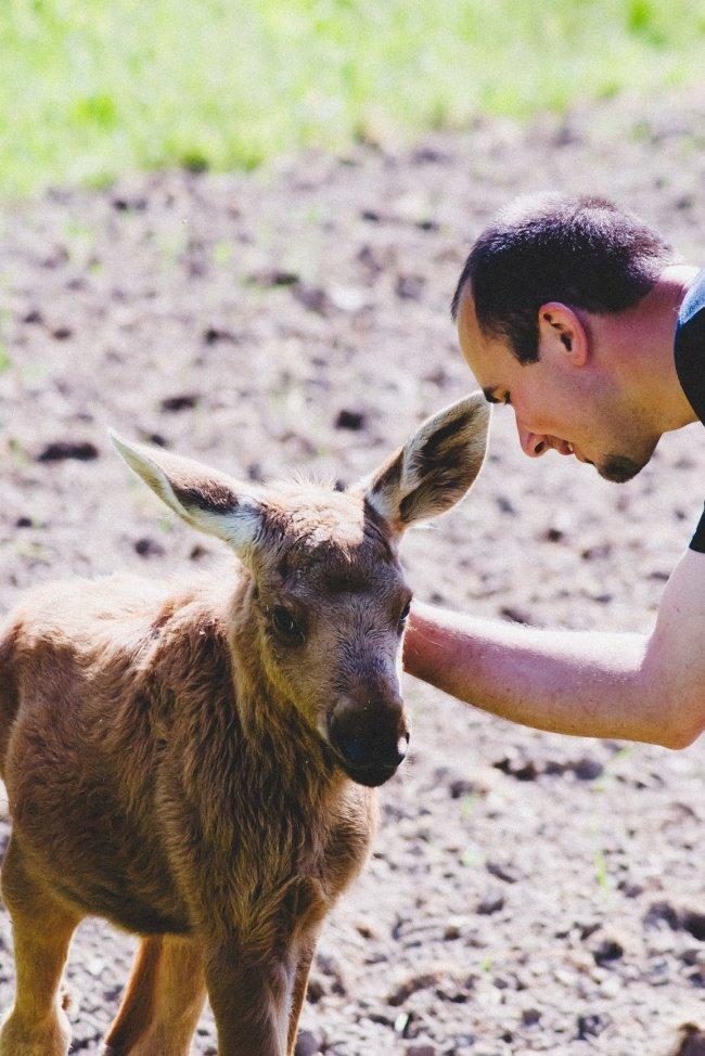 Les animaux remercient leurs sauveteurs