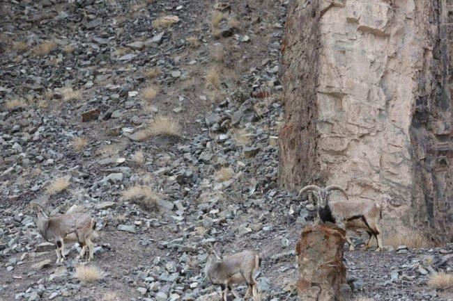 animais escondidos na natureza
