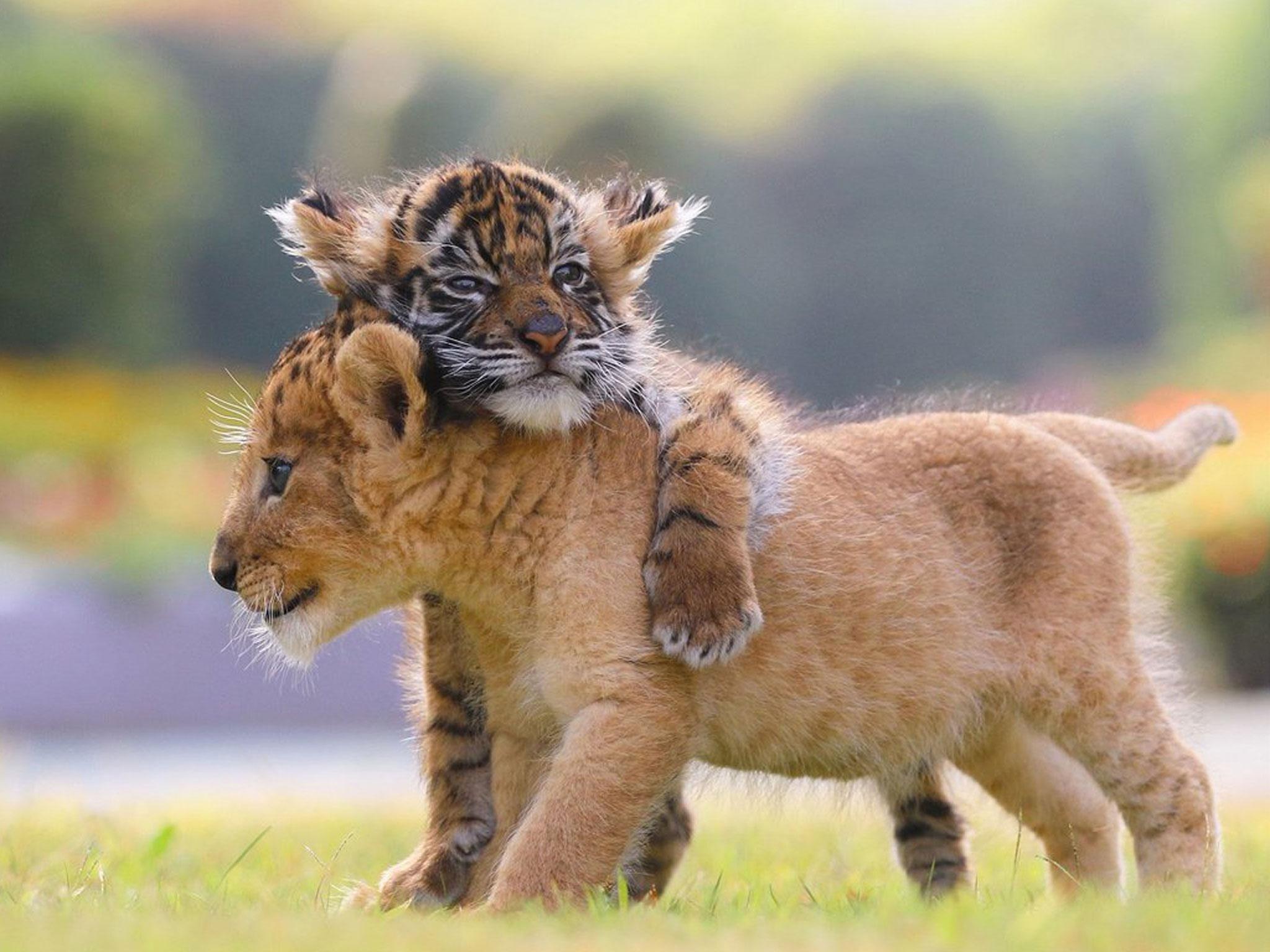 cubs9.jpg?resize=1200,630 - 今も昔も愛される動物占い診断の魅力