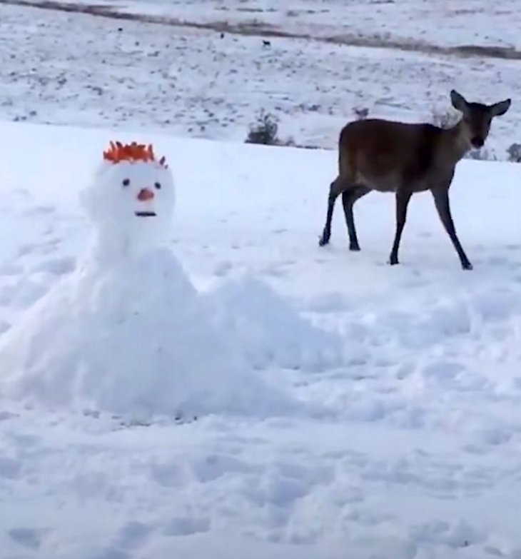 deerclose - Deer Looks Curiously At Unusual Snowman. What She Does Next Has Internet In Laughter