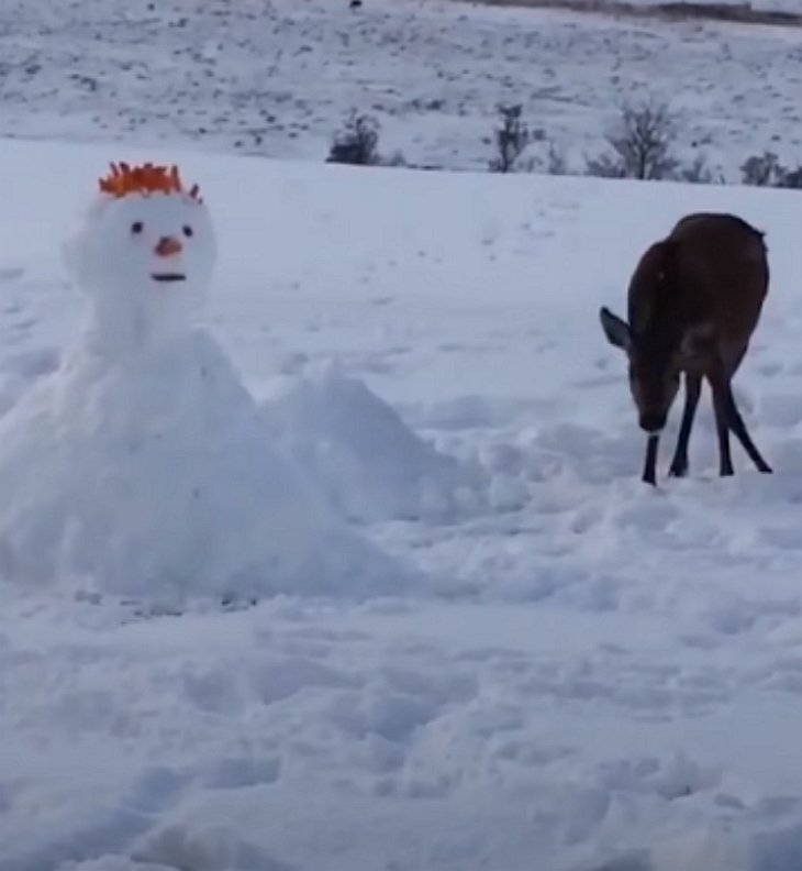 deercurious - Deer Looks Curiously At Unusual Snowman. What She Does Next Has Internet In Laughter