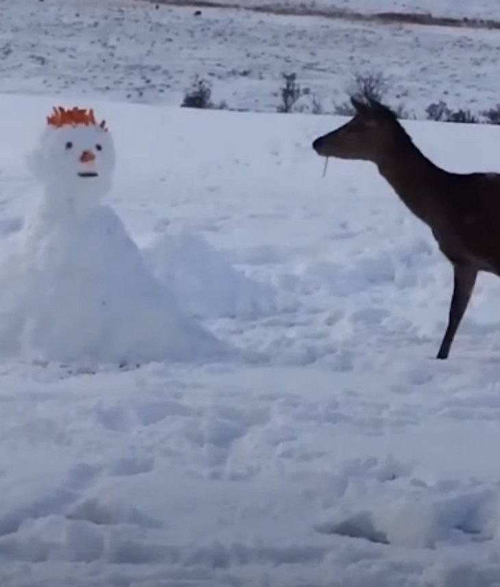 deerstare - Deer Looks Curiously At Unusual Snowman. What She Does Next Has Internet In Laughter