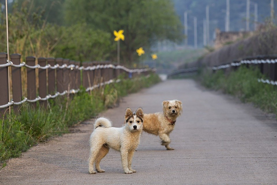 Dog, Couple, Road