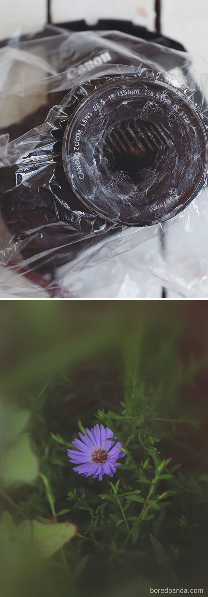 Use A Plastic Bag Smeared With Vaseline For A Soft-Focus Lens Effect