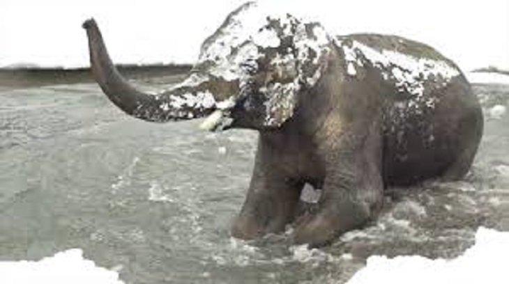 polar3 - Le zoo doit fermer à cause de la neige...Les caméras surprennent les animaux au paradis!