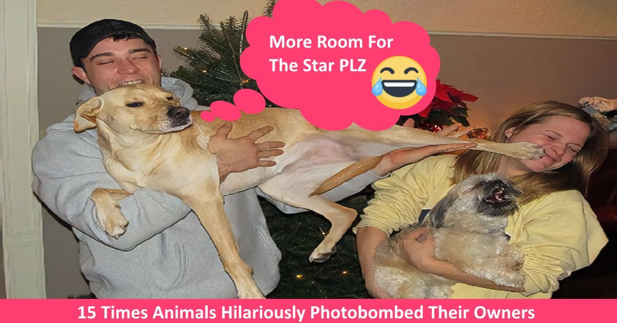 animalphotobomb.jpg?resize=648,365 - 15+ Times Animals Hilariously Photobombed Their Owners