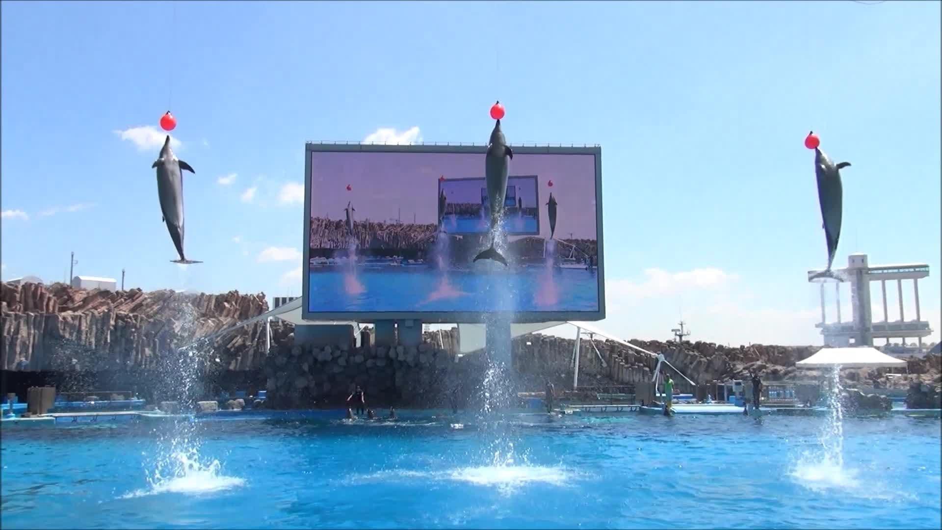 名古屋港水族館 イルカショー에 대한 이미지 검색결과