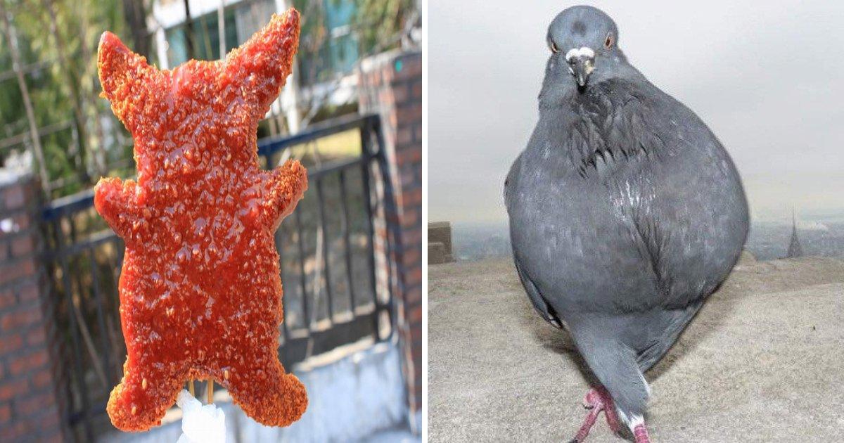 article thumbnail 11 - 피카츄 돈까스는 '비둘기 고기'로 만들어 졌다는 충격적 소문…그 진위 여부는?