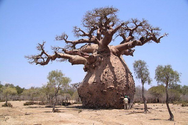 amazing trees에 대한 이미지 검색결과