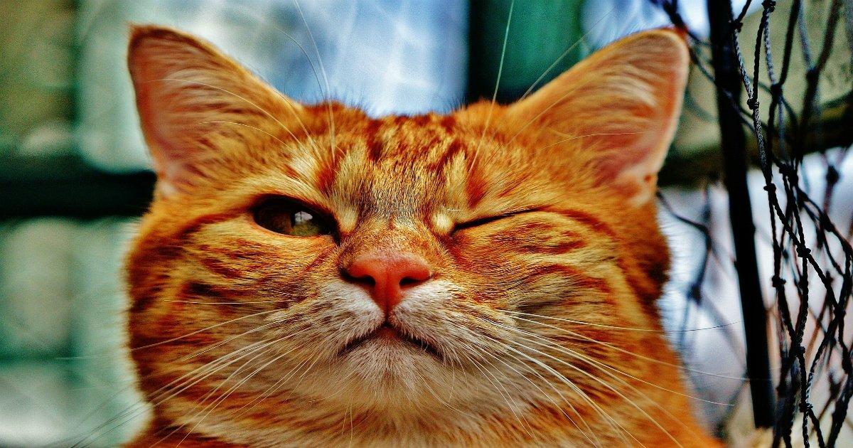 cat 1333926 1920.jpg?resize=1200,630 - 고양이가 집사를 칭찬하고 싶을 때 보내는 '시그널' 8가지