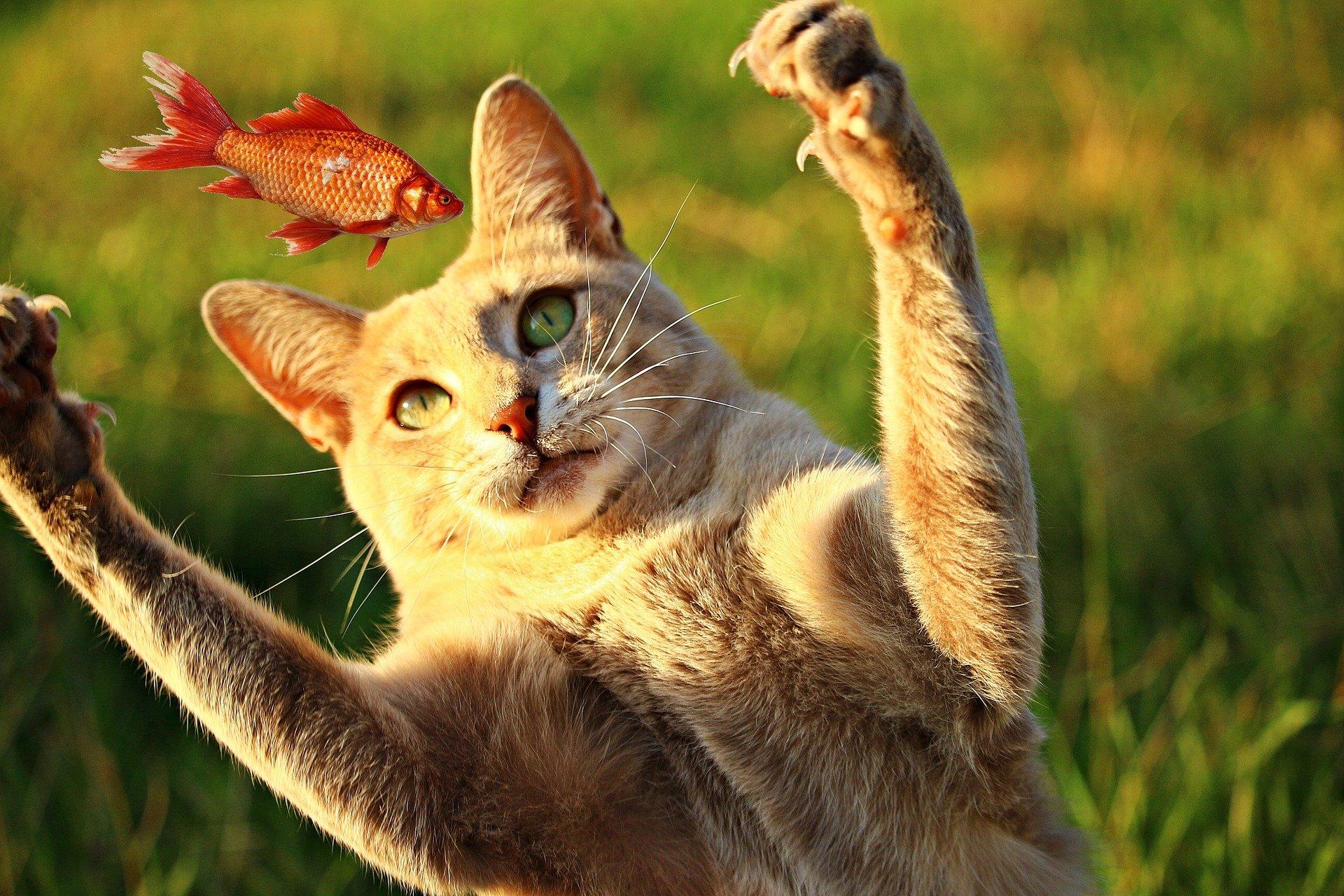cat 2603026 1920 2 1024x683 - 고양이가 집사를 칭찬하고 싶을 때 보내는 '시그널' 8가지