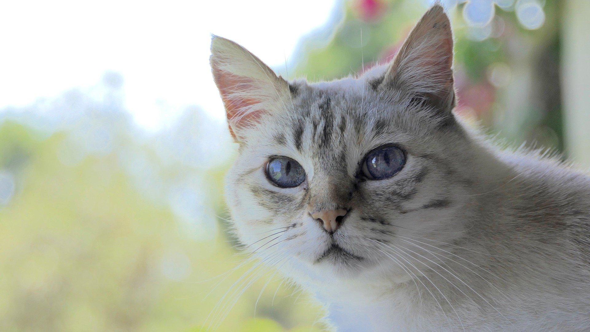 cat 3052383 1920 1024x576 - 고양이가 집사를 칭찬하고 싶을 때 보내는 '시그널' 8가지
