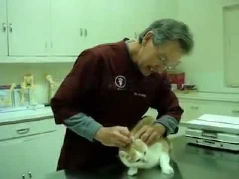 猫 医者에 대한 이미지 검색결과