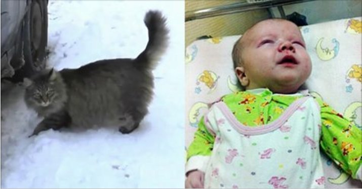 cat-saves-infant-1