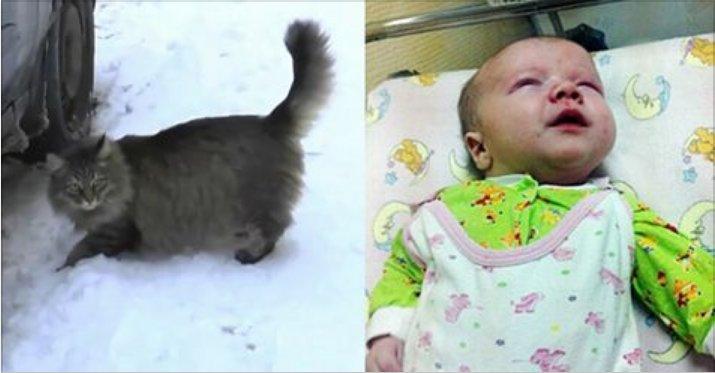 gato-salva-infantil-1
