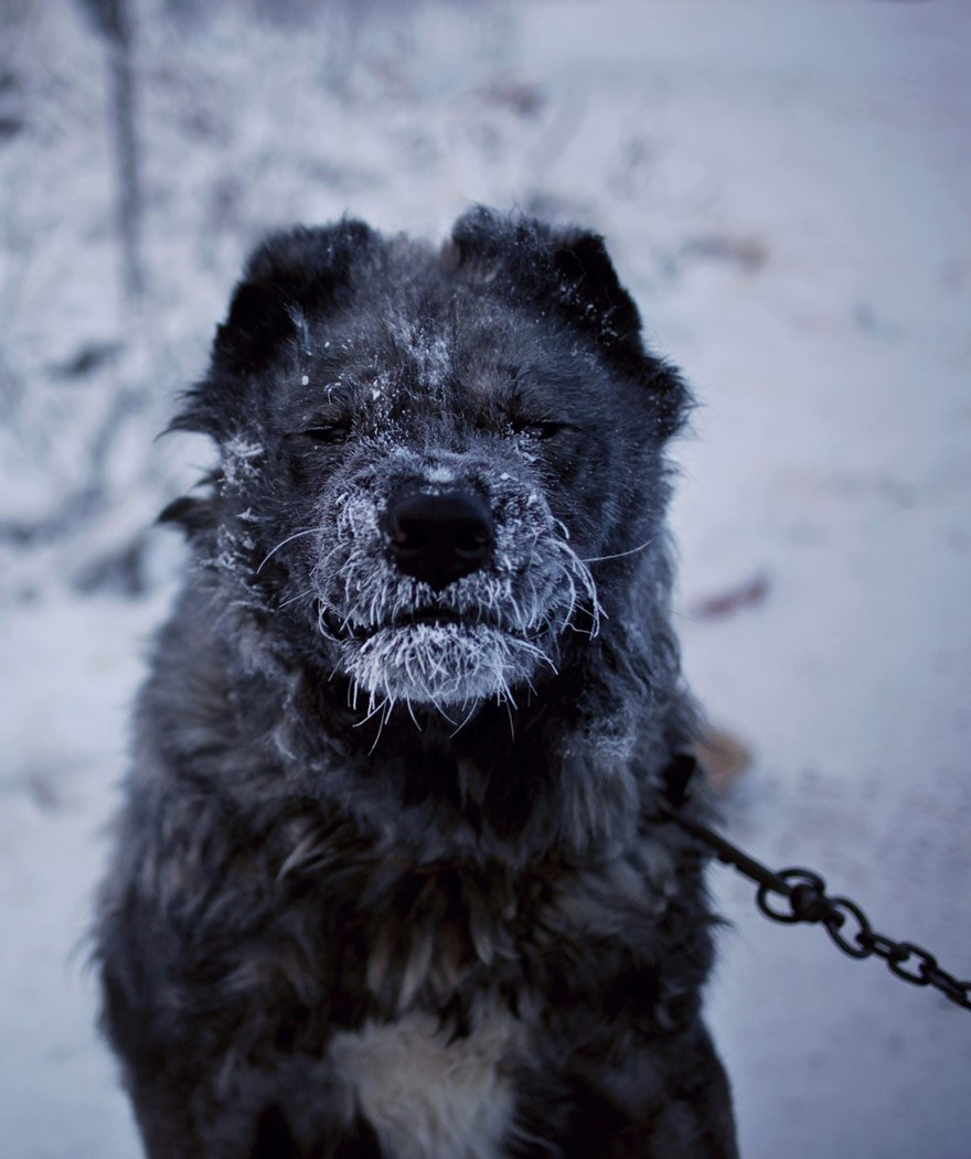 coldest village oymyakon russia amos chaple 24 - New Zealand Photographer Goes To Undoubtedly The Coldest Region On Earth And Documents The Life Of Its Inhabitants