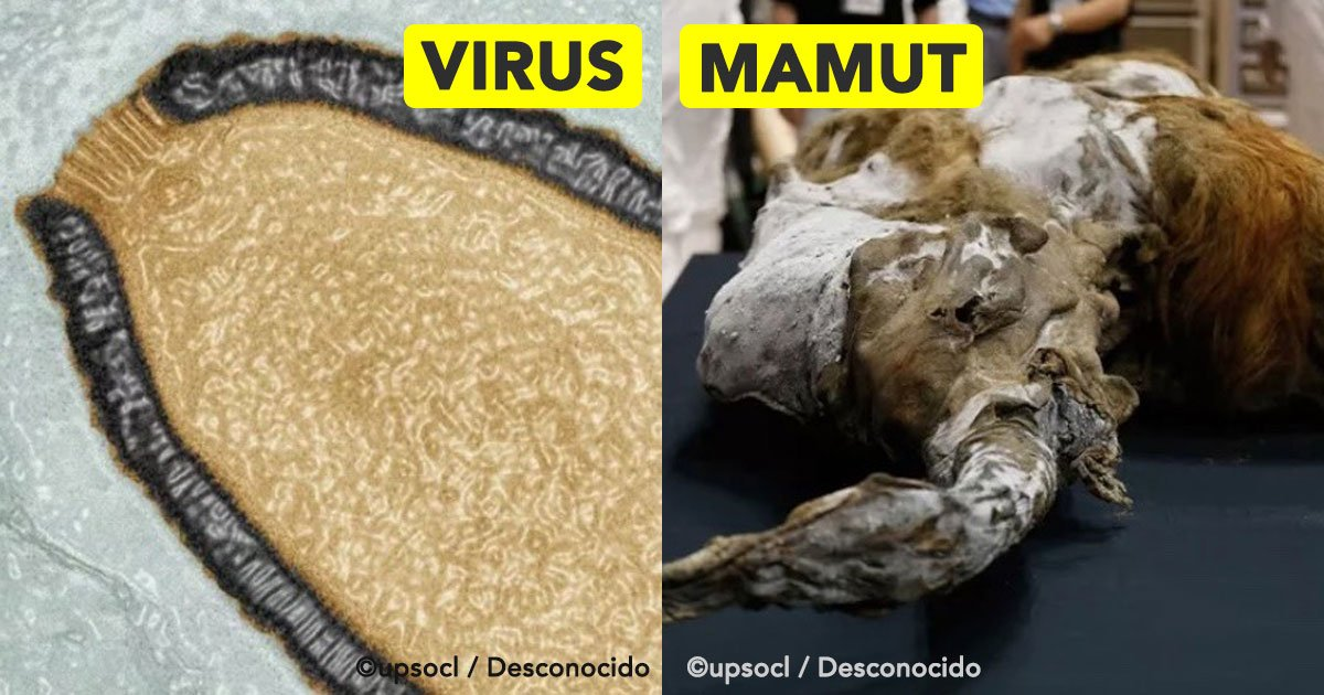 cover 8.jpg?resize=1200,630 - 10 coisas incríveis encontradas sob o gelo... como a múmia de uma menina de 500 anos, por exemplo!