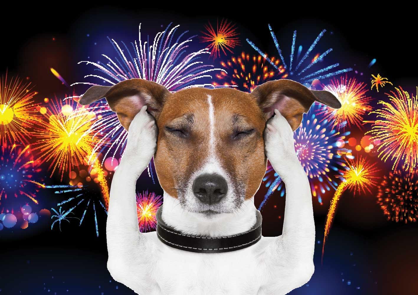dog fireworks.jpg?resize=300,169 - Campos do Jordão celebra virada do ano com queima de fogos silenciosos