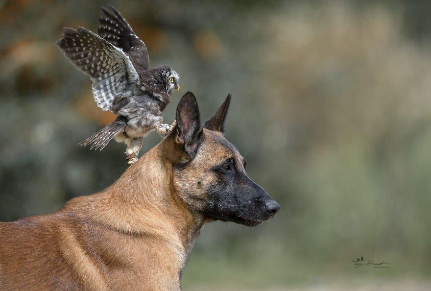 dogowl12