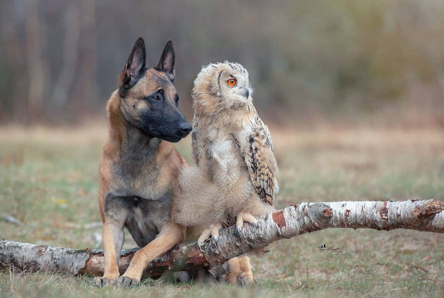 dogowl16