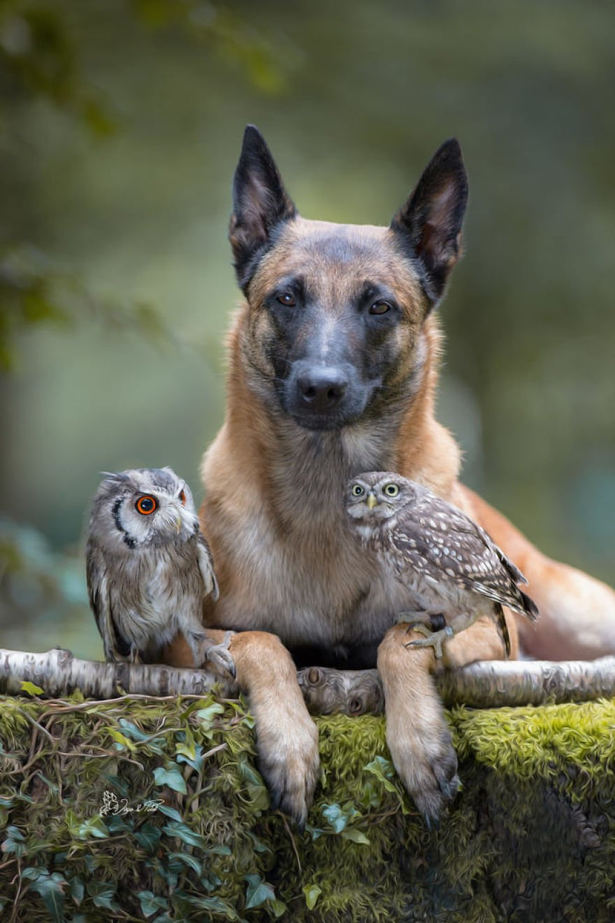 dogowl29