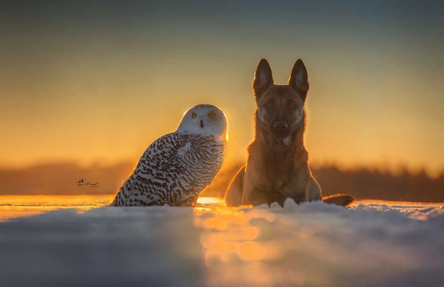 dogowl33