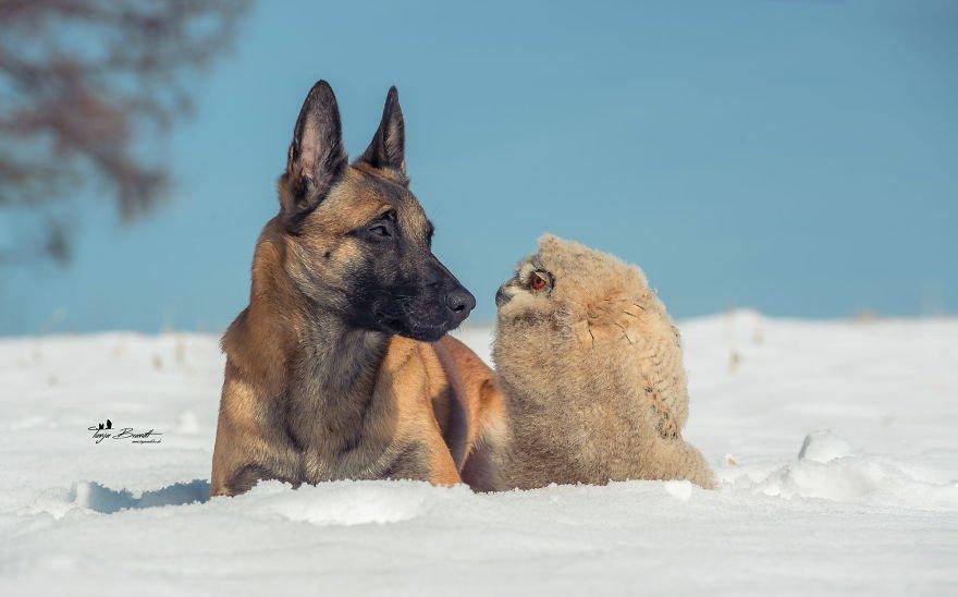 dogowl34