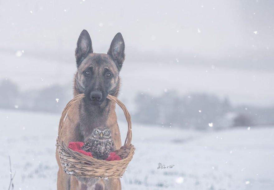 dogowl36