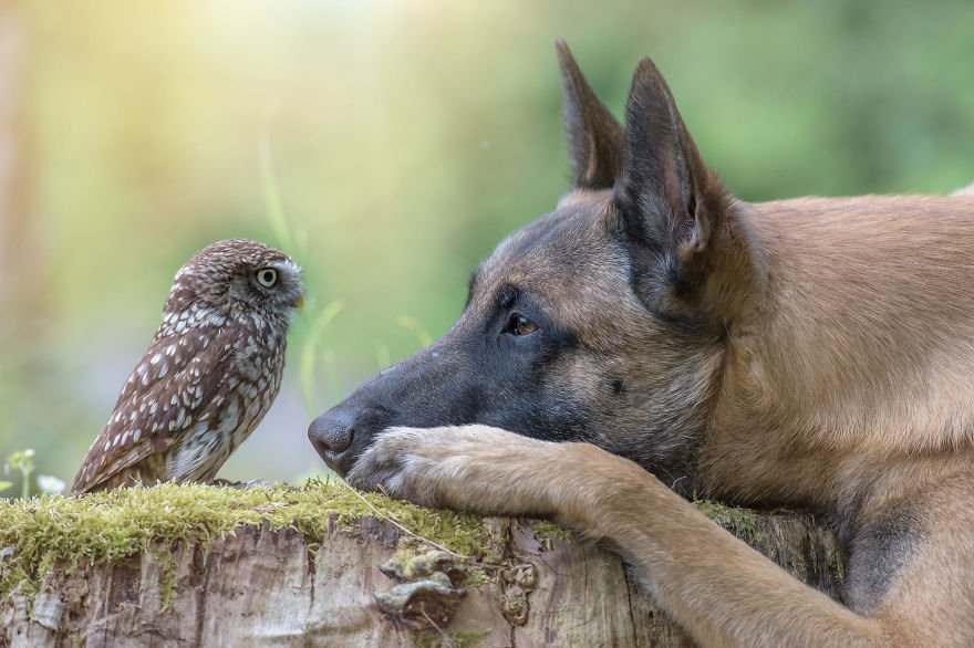dogowl6