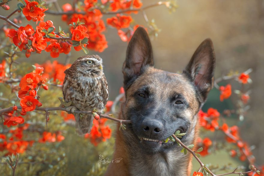 dogowl7