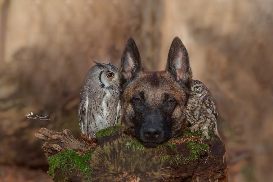 dogow9