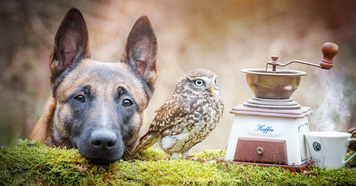 dogowlend - There is Something Special About Ingo the Dog that Makes His Feathers Friends Love Him- Checkout The Adorable Photos.