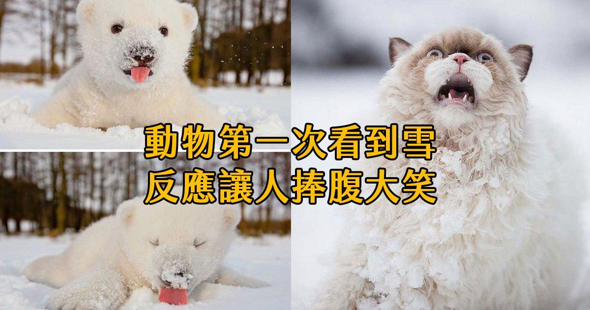 e69caae591bde5908d 1 25.png?resize=1200,630 - 當動物們第一次看到下雪?反應有歡笑有淚水,也有嚇到並軌的...