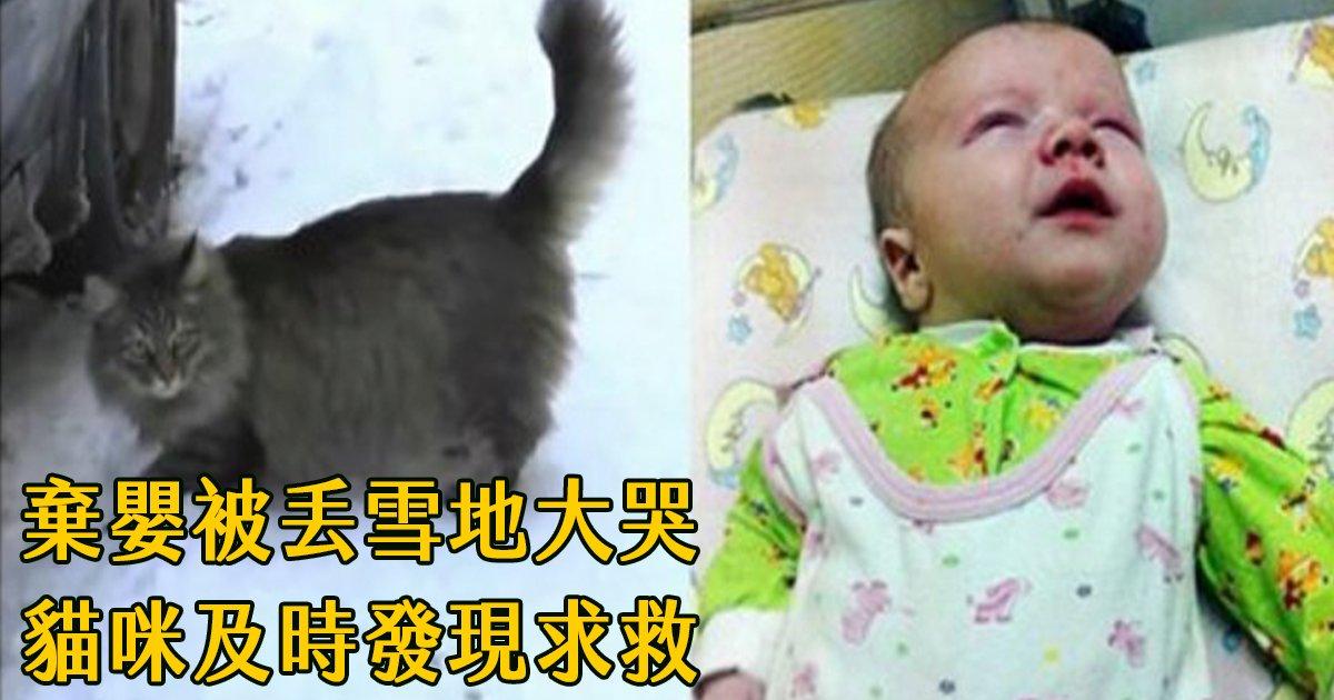 e69caae591bde5908d 1 3.png?resize=1200,630 - 狠心父母將嬰兒丟棄在雪地,野貓及時發現用體溫保住小生命!