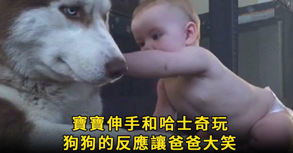 e69caae591bde5908d 1 47.png?resize=1200,630 - 寶寶爬到哈士奇身邊玩耍,原以為狗狗會生氣,想不到結果竟然是...