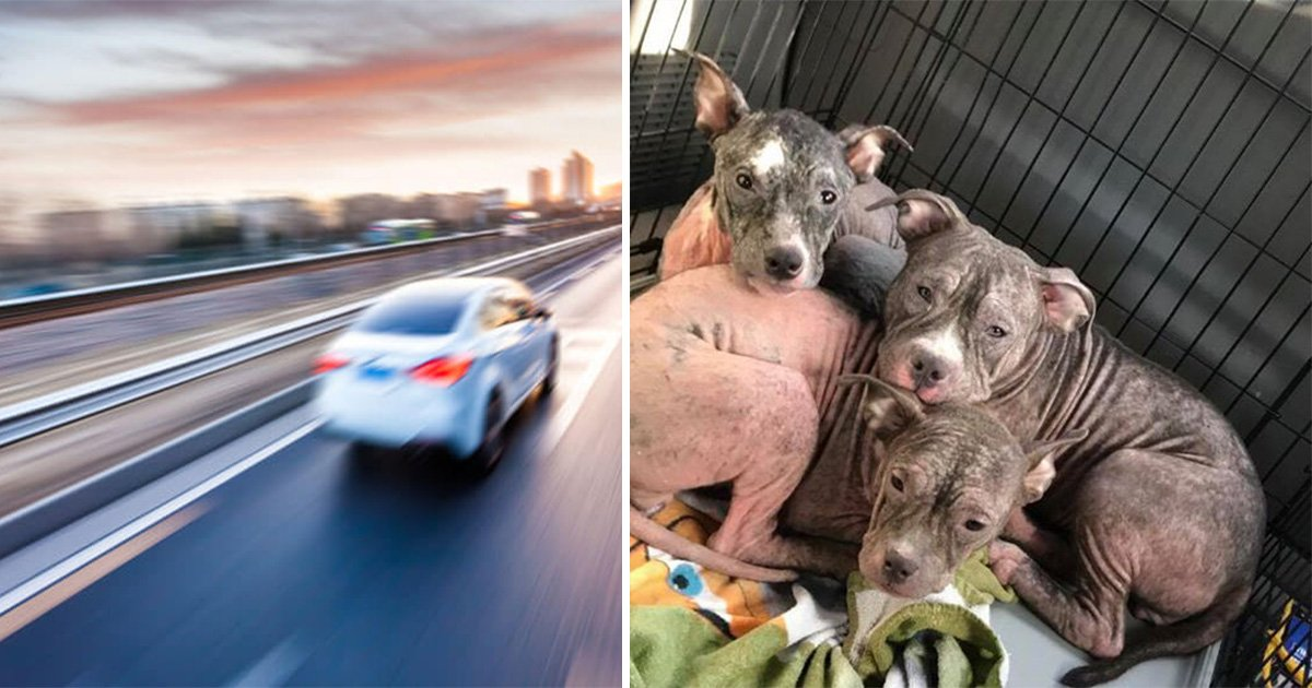 ec8db8eb84ac11eab09c.jpg?resize=300,169 - Witness Reports Three Sick Pups Thrown Out a Moving Car, Rescuers Nurtures Them Back to Health