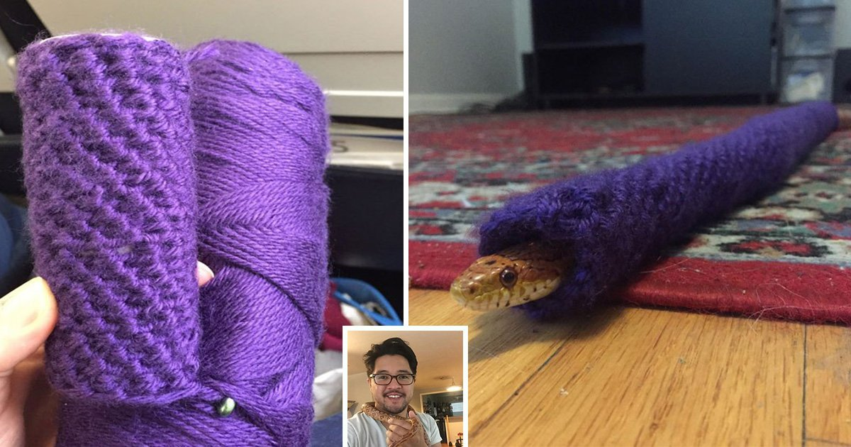 ec8db8eb84ac14 5.jpg?resize=300,169 - Snake Gets a Knit Sweater from Owner's Little Sister for Christmas and Seems to Enjoy It
