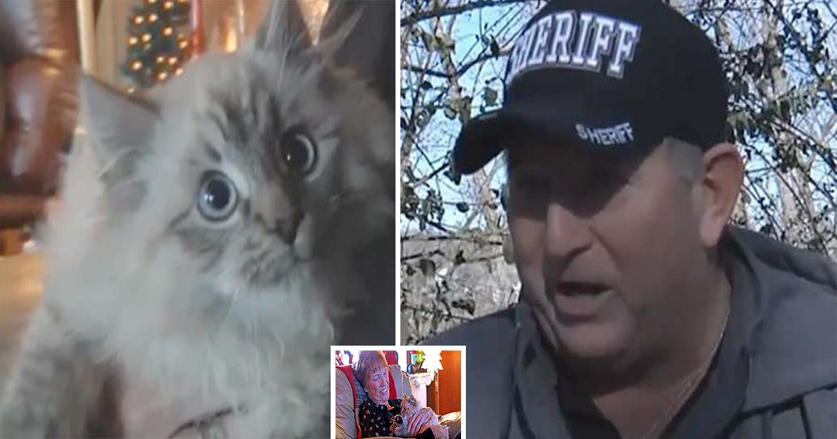 ec8db8eb84ac4 17 - Couple Gives Stray Kitten New Lease on Life after Spending Hours in the Cold, Frozen to the Boat Dock.