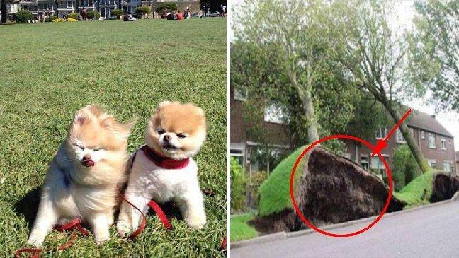 ec8db8eb84ac4 9 1.jpg?resize=300,169 - 10 photos qui montrent que le vent est un vrai farceur!