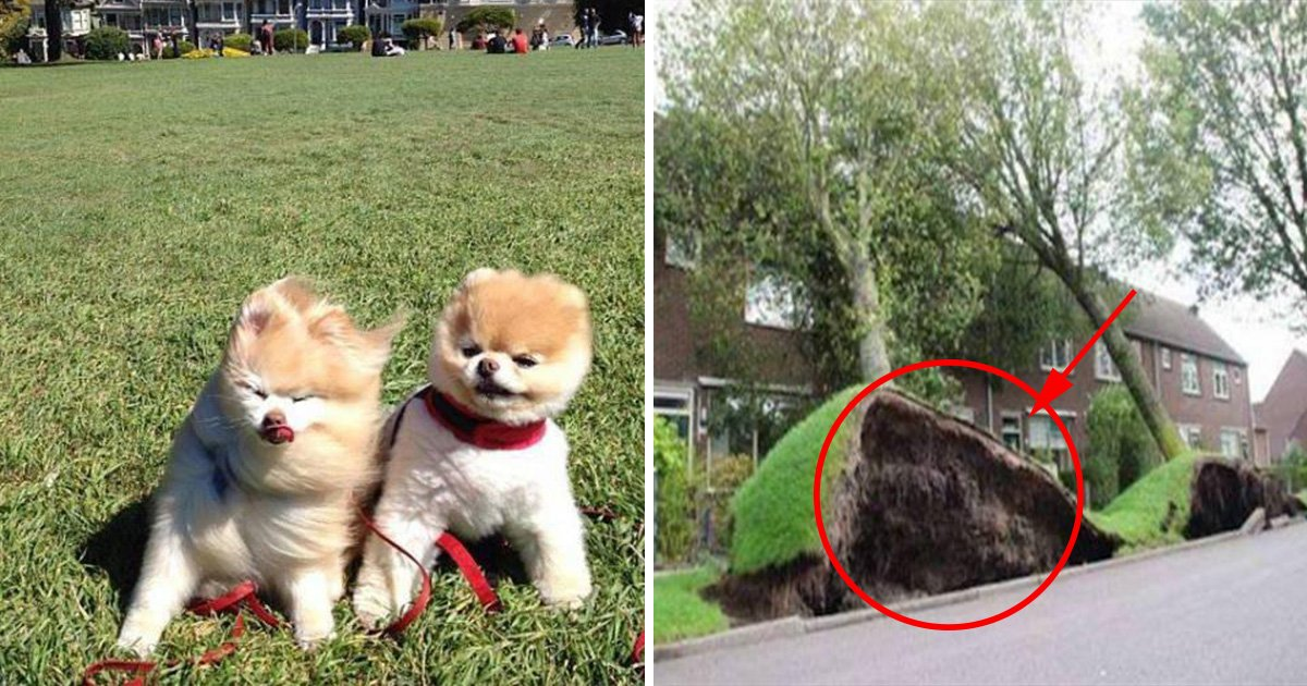 ec8db8eb84ac4 9.jpg?resize=636,358 - 10 Pictures that Proves Wind has a Sense of Humor