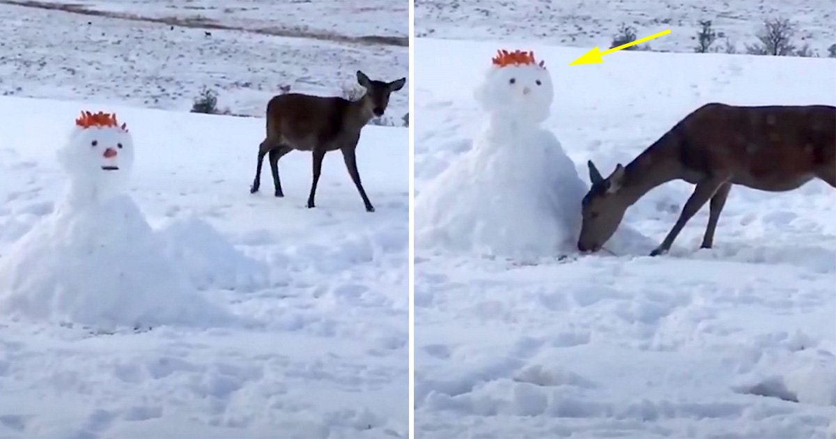 ec8db8eb84ac8 1.jpg?resize=1200,630 - Deer Looks Curiously At Unusual Snowman. What She Does Next Has Internet In Laughter