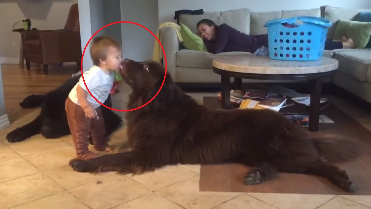 eca09cebaaa9 ec9786ec9d8c 17.png?resize=1200,630 - Toddler Surprised When The Dog He Kissed Licked Him Back