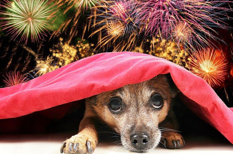 fireworksdogs