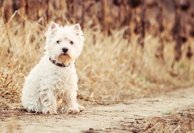 犬占い 恋愛에 대한 이미지 검색결과