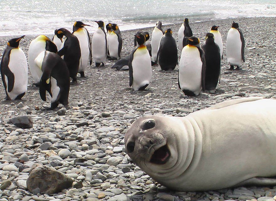 funny animal photobombs 13  880 - 순간적으로 찍힌 재미있는 동물사진