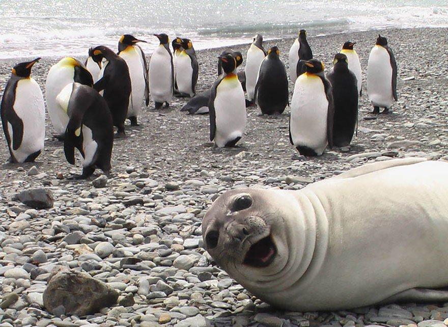 funny-animal-photobombs-13__880