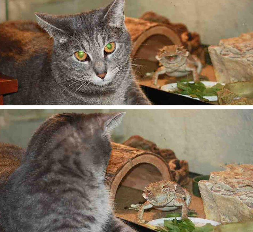 funny animal photobombs 16  880 - 순간적으로 찍힌 재미있는 동물사진