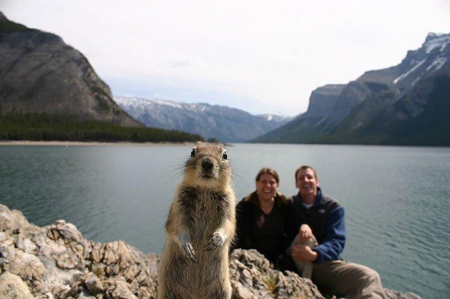 funny animal photobombs 1  880 - 순간적으로 찍힌 재미있는 동물사진