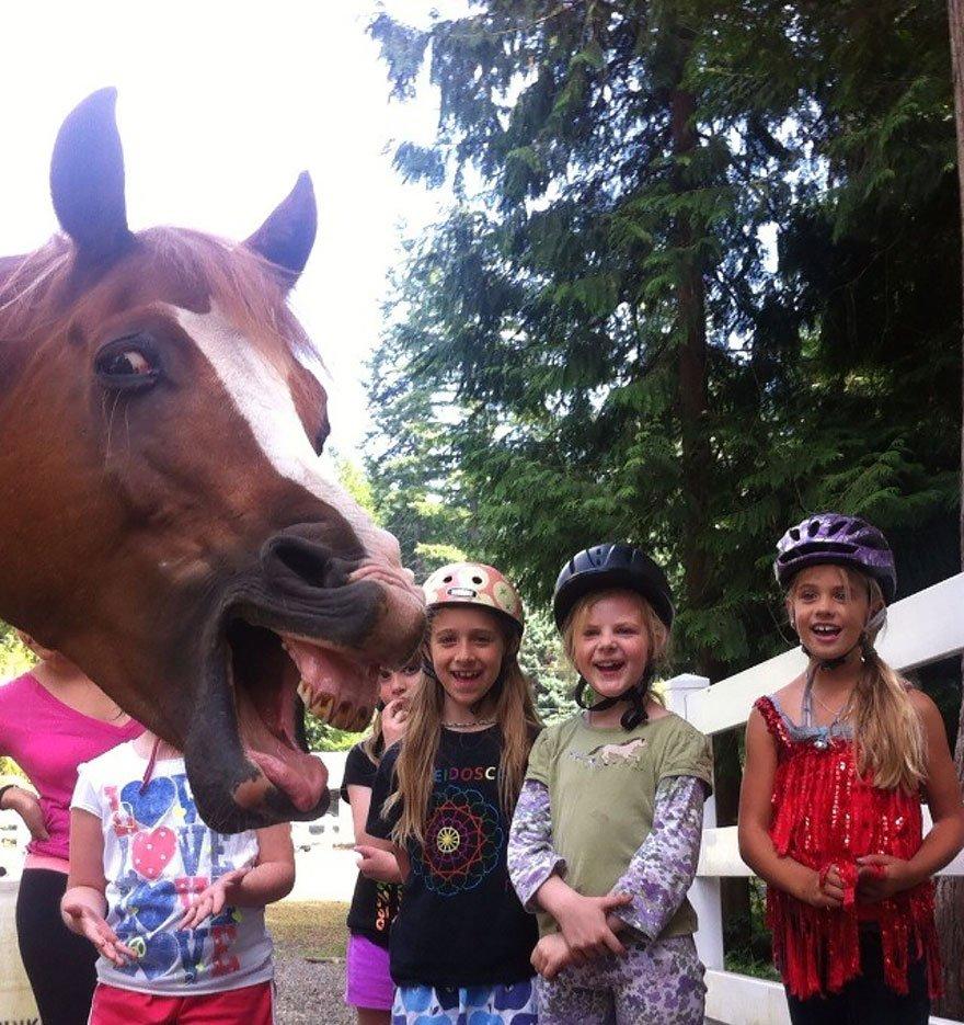 funny animal photobombs 5  880 - 순간적으로 찍힌 재미있는 동물사진