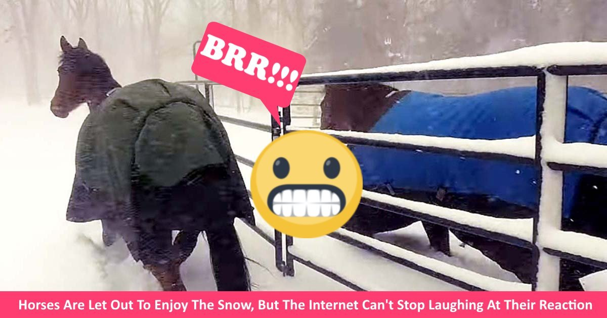 horsessnow.jpg?resize=300,169 - Horses Are Let Out To Enjoy The Snow, But The Internet Can't Stop Laughing At Their Reaction